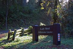 Redwoods National Park (Jeffrey Neihart) Tags: jeffreyneihart redwoods california trees grove sunbeam path drivethrutree ferns