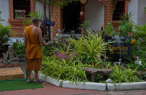 Chiang Mai - temple - moine
