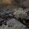 Lichen (evans.photo) Tags: lichen nature macro wales ceredigion cwmystwyth