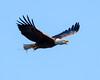 Bald Eagle with nesting materials (jeremy.mudd) Tags: eagle baldeagle americanbaldeagle americasbird nationalbird bif birdsinflight nesting bird birds tamron nikon nikond500 eagleinflight flying