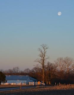 Amish Morning. New Wilmington, PA