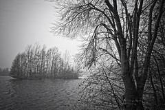 Horizontal Snowfall (Stefan Zwi.) Tags: snow storm lake bw schwarzweiss