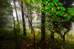 por-saibi-3 (juan luis olaeta) Tags: forest tree autumn otoño udazkena bosque basoa fog canoneos60d photoshop
