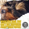 Of course you can also adopt happiness! (itsayorkielife) Tags: itsayorkielife yorkie yorkielove yorkiememe yorkshireterrier