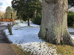 Huge Oak & Light Snow (Marc Sayce) Tags: oak tree snow winter's day lodge alice holt forest hampshire farnham surrey south downs national park winter february 2018