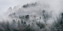 Clouds moving through the trees (Don Filmer) Tags: winter clouds trees on1 canada britishcolumbia pittlake places