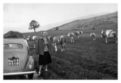 mamma con le mucche a Neuchâtel - settembre 1952 (50/5) (dindolina) Tags: photo fotografia blackandwhite bw biancoenero monochrome monocromo vintage 1952 1950s fifties annicinquanta family famiglia history storia marialaviniabovelli mucca cow animal viaggio vacation vacanze trip car automobili switzerland svizzera lanciaardea