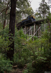 Tall Timber (Dobpics O'Brien) Tags: puffingbilly pbr puffing pbps pass locomotive diesel dh59 wright rail railway railways engine victorian victoria vr narrow gauge gembrook billy bridge