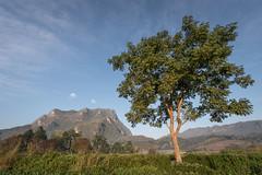 Doi Chiang Dao and a Tree (jonasfj) Tags: nikond750 tamron153028 15mm ultrawideangle chiangdao chiangmai thailand north asia southeastasia doichiangdao ricefield tamron 1530 clouds