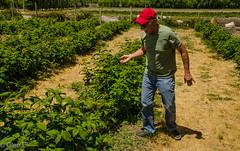 Argentine Farmer (nebulous 1) Tags: gaiman argentina patagonia farmer farm rasberries plants nikon nebulous1 glene