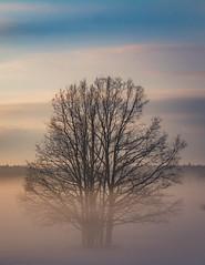 IMG_2399-2 (s.niewiarowska) Tags: grodzisk drzewa mgła podlasie
