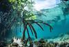 mangrove memories (Cruising, traveling & dive pics.) Tags: png 2017 seagrass mangroves