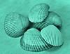 Shells (deanrr) Tags: macromondays shells seashells february 5 2018 monochrome nature macromondayas macro