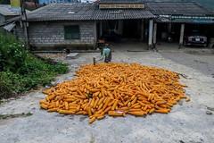 Sušení kukuřice (zcesty) Tags: vietnam23 sušení kukuřice dům domorodci vietnam dosvěta hàgiang vn