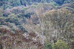 Tiradentes-MG (Johnny Photofucker) Tags: tiradentes minasgerais mg brasil brazil brasile 100400mm vegetação floresta forest foresta lightroom paineira verde green cerrado natureza natura nature árvore tree albero alberi árvores trees