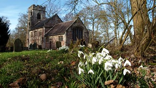Snowdrops and St Michael's Church