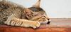 Hotel cat (Meino NL OFF LINE UNTIL JUNE 21) Tags: cat kitten srilanka