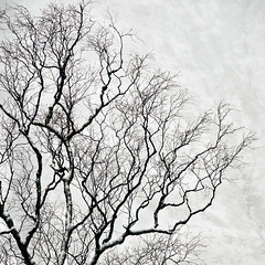 The Winter Tree (Sez_D) Tags: glencoe tree winter snow mountain lostvalley scotland highlands kentscape