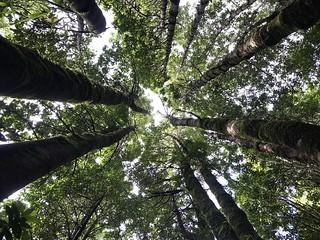 Bosque de Canelos