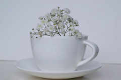 White (adelina_tr) Tags: flowers whitebackground lifeisarainbow cupoftea