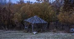 Esta casa es una ruina. (M,L.C.*) Tags: árbol árboles bosque madera campo parados otoño hojas casa caseta refugio