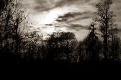(WhiskeyTFox) Tags: phinizy swamp bw landscape silhouette augusta georgia ga