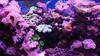 Underwater Garden (Seventh Heaven Photography) Tags: sea anemones coral garden pink water aquarium melbourne sealife life victoria australia sony xperia xz1 phone camera fish anemone corals green reef marine animal tentacles cnidaria