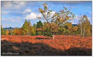 Haverbecker Heide