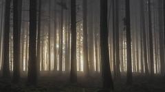 They're coming... (eins75) Tags: woods wald nebel fog mist misty trees tree baum bäume licht sonne sonnenaufgang sunrise cinematic alien aliens nature explore