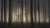 They're coming... (eins75) Tags: woods wald nebel fog mist misty trees tree baum bäume licht sonne sonnenaufgang sunrise cinematic alien aliens nature explore