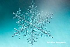 IMG_3153 (nitinpatel2) Tags: snowflakes winter macro snow crystal nature nitinpatel