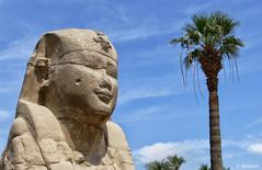 Esfinge. Av. Esfinges. Luxor (F. Nestares P.) Tags: egipto luxor esfinge