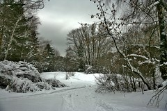My winter trails (vitalsimonovjb) Tags: moscow russia winter landscape mythology forest symbolism