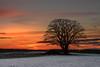 burning sky (hjuengst) Tags: sunset oberpframmern bavaria bayern baum tree sonnenuntergang silhouette snow winter winterbeauty nikond7200
