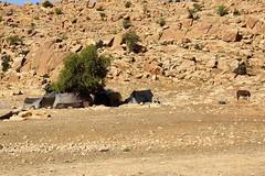 1206 (HerryB) Tags: morocco maroc maghreb nordafrika afrika africa afrique marokko reise voyage travel sonyalpha77 sonyalpha99 tamron alpha sony bechen heribert heribertbechen fotos photos photography herryb 2014 dokumentation documentation