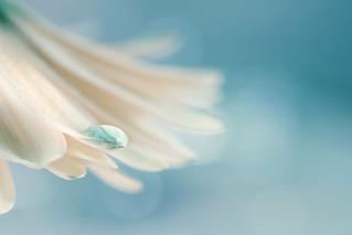 flower & drop