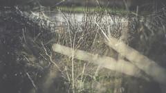 PB_012618_40 (losing.today) Tags: brianyoung oregon pacificnorthwest portland pdx portlandoregon portlandor winter nature outdoors naturepark plantlife plants moodyseason darkseason losingtoday grass grassstudies