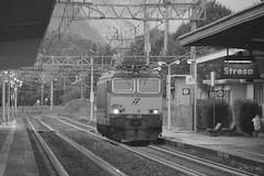 stresa settembre 2017 set 2 #18 (train_spotting) Tags: stresa mir mercitalia mercitaliarail trenitialiacargo ticargo divisionecargo tigre tigrone e652165 nikond7100