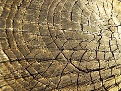 DSCF0438 (AliaGrafica) Tags: wood woods legna alberi trees countryside campagna pattern earth terra macro leaves foglie autunno autumn winter inverno