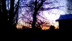 December sunset - TMT 365/88 (Maenette1) Tags: december sunset trees house menominee uppermichigan treemendoustuesday flicker365 michiganfavorites project365