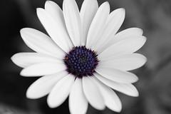Flowers (kimsfotos) Tags: iris roses columbine garden red yellow blue peach white pink purple dahlia daisy gebera lily lilac peony violet