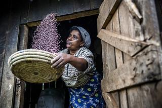 Conservation agriculture in Kenya