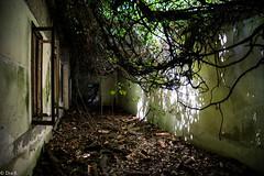 Poveglia - Ca Roman 55 (Dra.B.) Tags: poveglia ca roman ex ospedale colonia venezia veneto italia