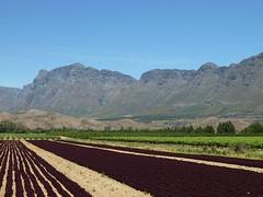 Robertson Valley, Western Cape