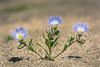 Suspiro (José L.Gutiérrez) Tags: nikon d7100 nature naturaleza fisheye reflex mirror landscape paisaje 10mm atacama chile desierto desert flor flower 300mm