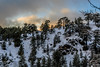 Snow at Troodos (13) (Polis Poliviou) Tags: snow nationalpark troodosmountains cypruscountryside clouds cloudy 2018 countryside freezing cyprus lovenature love naturepictures naturepics forest rural mount mountain mountains pinewood cold frost winter pinetrees pinetree mediterranean forestpark nationalforestpark olympus peak frozen morning environment nature ice snowtrees snowtree sports island cyprustheallyearroundisland cyprusinyourheart yearroundisland zypern republicofcyprus κύπροσ ©polispoliviou2018 polispoliviou polis poliviou πολυσ πολυβιου lovecyprus ski skateboard skiing skiers wood green earth canon