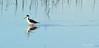 Morning Birds Tele 30 (Dave Skinner Photography) Tags: cosumnes river preserve sunrise birds heron egret cran clouds bridge swan almonds road 500mm winter birding