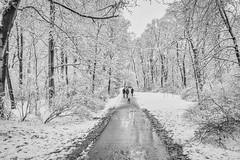 Englischer Garten in München (Janos Kertesz) Tags: englishgarden englischergarten münchen munich bavaria bayern park winter cold tree nature snow white season landscape road frost forest ice path frozen