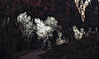 Zion National Park - Illumination (g*s*c) Tags: zionnationalpark 2018 illumination shadows thenarrows winter2018