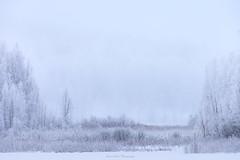Frozen World (laurilehtophotography) Tags: 2018 jyväskylä kortesuo talvi suomi finland winter fog mist frozen tree forest lake snow ice nature landscape nikon d610 nikkor 200500mm telephoto amazing europe world photography outdoor